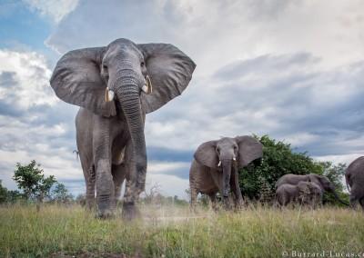 Elephants, South Luangwa National Park, Zambia
