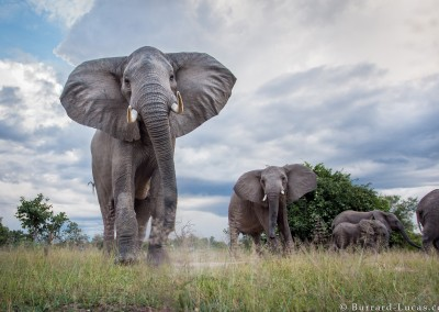 Elephants, South Luangwa National Park, Zambia